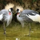 Isfahan-Birds-Garden-IsfahanInfo