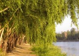 Nazhvan-Forest-Park-IsfahanInfo